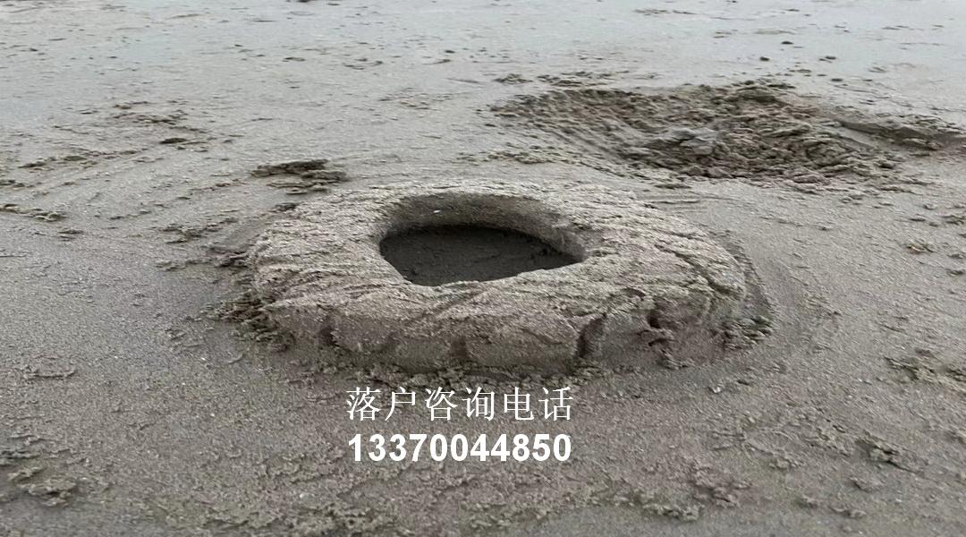 转学上海所需要知道的步骤