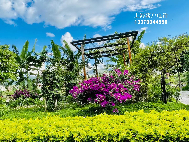 2000万沪漂一直在纠结的事情:到底是回老家还是继续漂