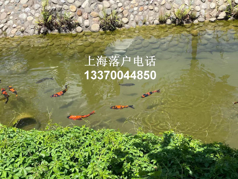 这些应届生可以直接落户上海,但是一定要注意这些细节