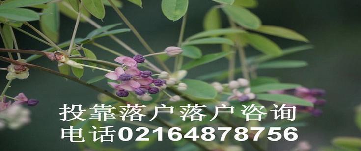 投靠落户上海咨询电话021-64878756