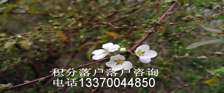 上海居住证积分落户咨询电话021-34610179