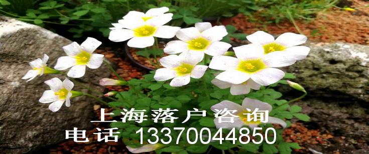上海落户咨询电话021-34610179