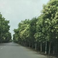 广州投靠落户咨询