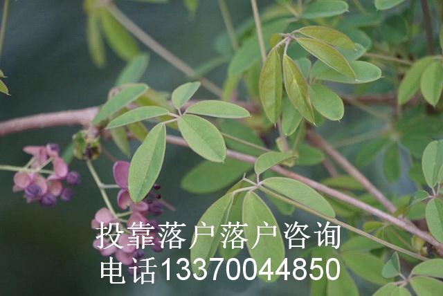 上海引进高层次人才落户_上海人才引进入户_申请人才引进流程