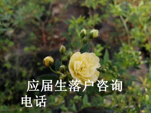 上海留学人员人才引进落户_留学生落户政策_留学生落沪2019