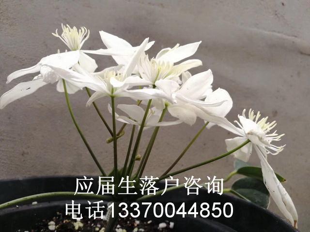 上海嘉定居住证积分_上海居住证120分积分_嘉定居住证办理积分