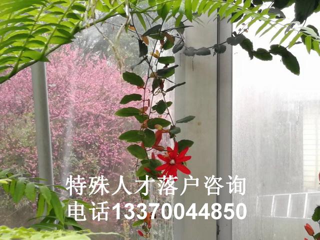 2021年上海积分落户查询_上海积分落户结果查询