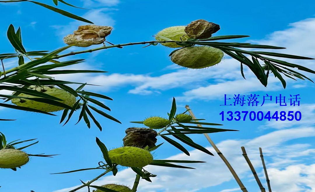 上海积分居住证办理条件_公司办理居住证积分_居住证积分续办申请